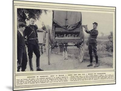 Despatches by Pigeon-Post, About to Release a French Army Bird with a Message for Headquarters--Mounted Photographic Print