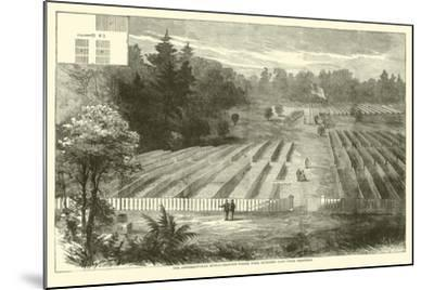 The Andersonville Burial-Grounds Where Were Interred 14,000 Union Prisoners, May 1865--Mounted Giclee Print