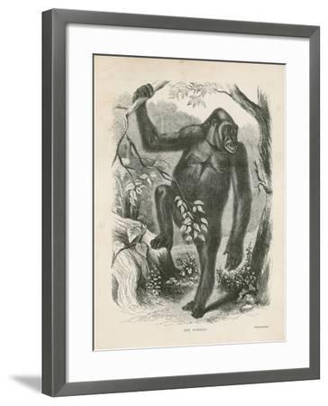 The Gorilla, Frontispiece for Explorations and Adventures in Equatorial Africa by Paul B Du Chaillu--Framed Giclee Print