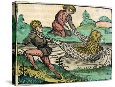 Catching a Lion Cat Fish Monster Published in the Nuremberg Chronicle, 1493--Stretched Canvas Print