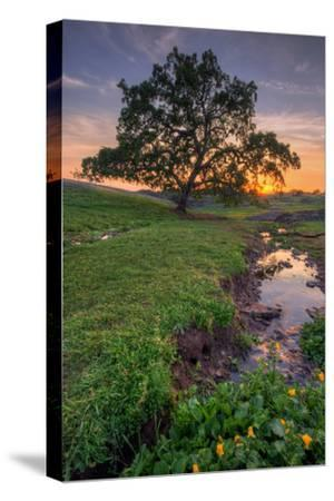 Sunset Steam at Table Mountain, Oroville California-Vincent James-Stretched Canvas Print