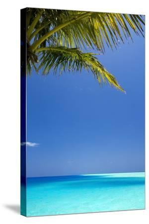 Shades of Blue and Palm Tree, Tropical Beach, Maldives, Indian Ocean, Asia-Sakis-Stretched Canvas Print