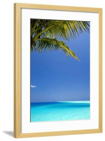 Shades of Blue and Palm Tree, Tropical Beach, Maldives, Indian Ocean, Asia-Sakis-Framed Photographic Print