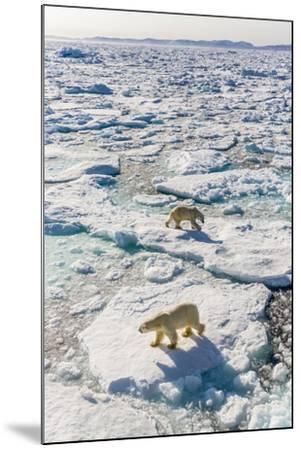 Adult Polar Bears (Ursus Maritimus)-Michael-Mounted Photographic Print