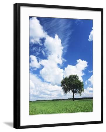 Single Tree in a Field, Swabian Alb, Baden Wurttemberg, Germany, Europe-Markus Lange-Framed Photographic Print