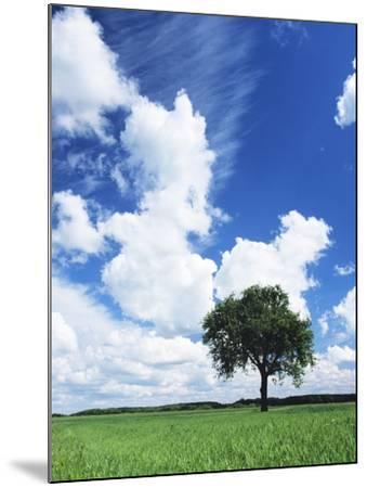 Single Tree in a Field, Swabian Alb, Baden Wurttemberg, Germany, Europe-Markus Lange-Mounted Photographic Print