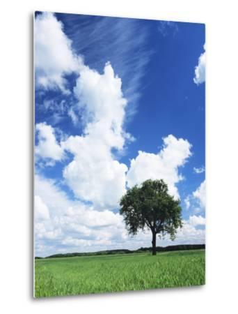 Single Tree in a Field, Swabian Alb, Baden Wurttemberg, Germany, Europe-Markus Lange-Metal Print