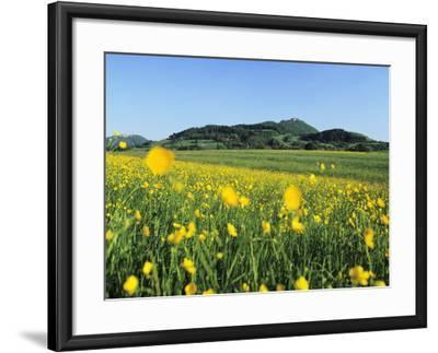View from a Flower Meadow to Teckberg Mountain with Teck Castle-Markus Lange-Framed Photographic Print