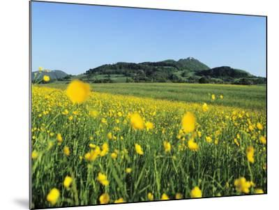 View from a Flower Meadow to Teckberg Mountain with Teck Castle-Markus Lange-Mounted Photographic Print