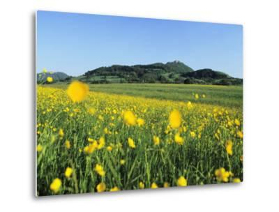 View from a Flower Meadow to Teckberg Mountain with Teck Castle-Markus Lange-Metal Print