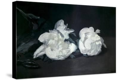 Branch of White Peonies and Secateurs-Edouard Manet-Stretched Canvas Print