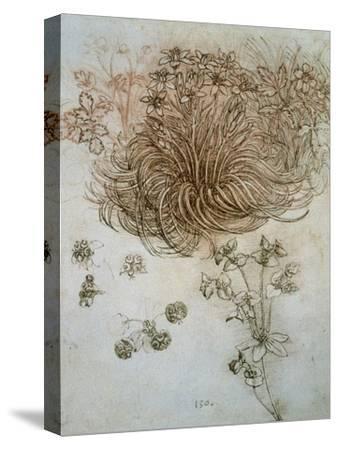 Star of Bethlehem, Wood Anemone and Sun Spurge-Leonardo da Vinci-Stretched Canvas Print