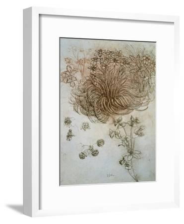 Star of Bethlehem, Wood Anemone and Sun Spurge-Leonardo da Vinci-Framed Premium Giclee Print