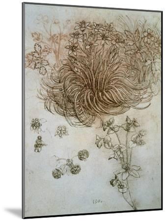 Star of Bethlehem, Wood Anemone and Sun Spurge-Leonardo da Vinci-Mounted Premium Giclee Print