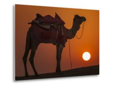 Camel Silhouetted Against the Setting Sun in the Thar Desert Near Jaisalmer, India-Frances Gallogly-Metal Print
