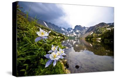 Colorado Columbines Blooming in Early July with Spring Run Off, Indian Peaks Rocky Mountains-Daniel Gambino-Stretched Canvas Print
