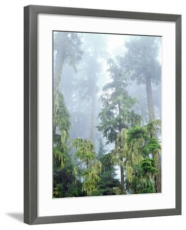USA, Oregon, Old-Growth Douglas Fir Tree in the Rainforest-Jaynes Gallery-Framed Photographic Print