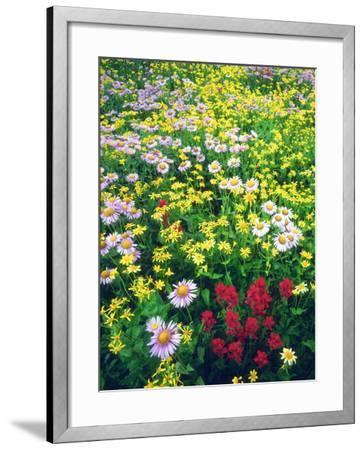 USA, Montana, Glacier National Park. Wildflowers-Jaynes Gallery-Framed Photographic Print