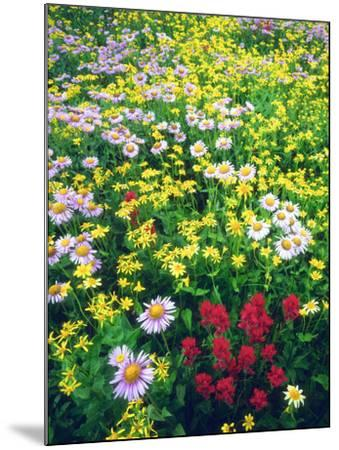 USA, Montana, Glacier National Park. Wildflowers-Jaynes Gallery-Mounted Photographic Print