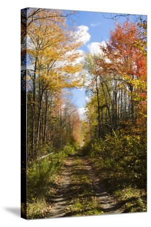 USA, Maine, Bar Harbor. Path in Fall Colors of Red and Gold Foliage-Bill Bachmann-Stretched Canvas Print