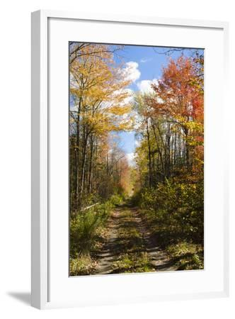 USA, Maine, Bar Harbor. Path in Fall Colors of Red and Gold Foliage-Bill Bachmann-Framed Photographic Print