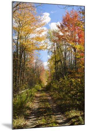 USA, Maine, Bar Harbor. Path in Fall Colors of Red and Gold Foliage-Bill Bachmann-Mounted Photographic Print