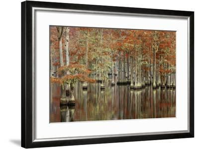 USA, Georgia, Cypress Swamp with Fall Reflections-Joanne Wells-Framed Photographic Print