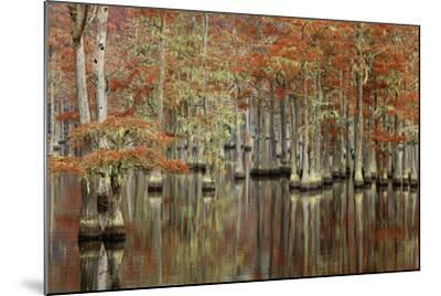 USA, Georgia, Cypress Swamp with Fall Reflections-Joanne Wells-Mounted Photographic Print