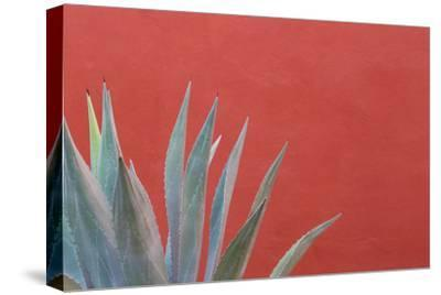 Mexico, San Miguel De Allende. Agave Plant Next to Colorful Wall-Jaynes Gallery-Stretched Canvas Print