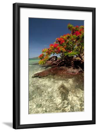 Christmas Tree at Vonu Point, Turtle Island, Yasawa Islands, Fiji-Roddy Scheer-Framed Photographic Print
