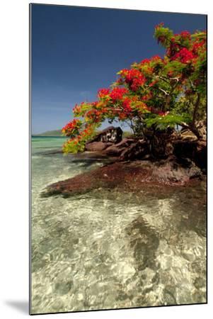 Christmas Tree at Vonu Point, Turtle Island, Yasawa Islands, Fiji-Roddy Scheer-Mounted Photographic Print