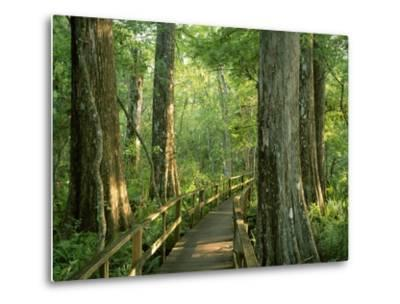 Boardwalk Through Forest of Bald Cypress Trees in Corkscrew Swamp-James Randklev-Metal Print