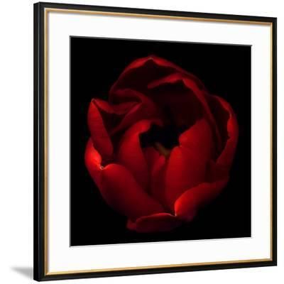 Big Red-Magda Indigo-Framed Photographic Print
