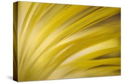 Filaments-Ursula Abresch-Stretched Canvas Print