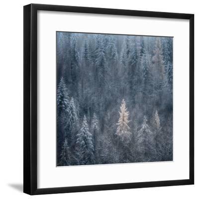 First Snow-Ursula Abresch-Framed Photographic Print
