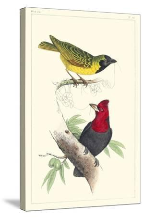 Lemaire Birds II-C.L. Lemaire-Stretched Canvas Print