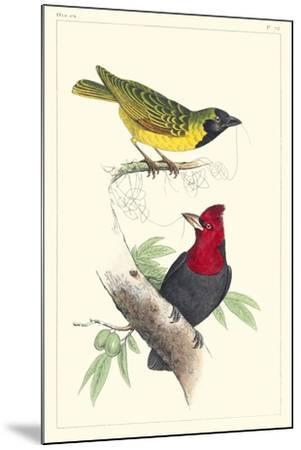 Lemaire Birds II-C.L. Lemaire-Mounted Art Print