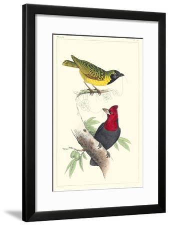 Lemaire Birds II-C.L. Lemaire-Framed Art Print