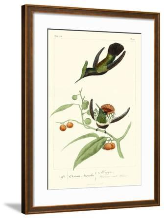 Lemaire Hummingbirds III-C.L. Lemaire-Framed Art Print