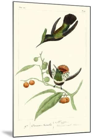 Lemaire Hummingbirds III-C.L. Lemaire-Mounted Art Print