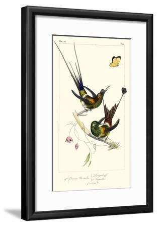 Lemaire Hummingbirds IV-C.L. Lemaire-Framed Art Print