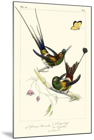 Lemaire Hummingbirds IV-C.L. Lemaire-Mounted Art Print