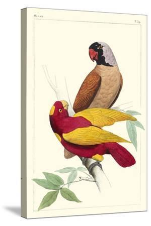 Lemaire Parrots II-C.L. Lemaire-Stretched Canvas Print