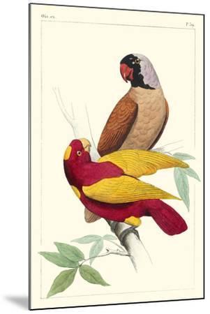 Lemaire Parrots II-C.L. Lemaire-Mounted Art Print