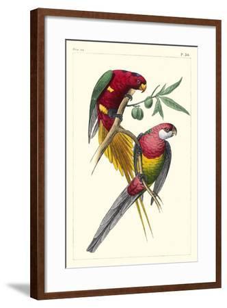 Lemaire Parrots III-C.L. Lemaire-Framed Art Print