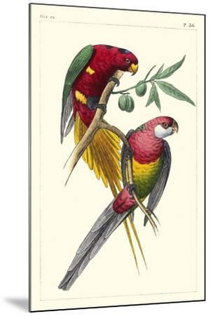 Lemaire Parrots III-C.L. Lemaire-Mounted Art Print