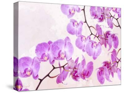 Fluttering Orchid I-Roozbeh-Stretched Canvas Print