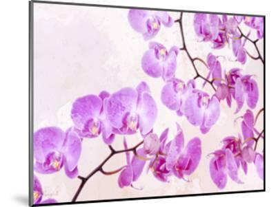 Fluttering Orchid I-Roozbeh-Mounted Art Print