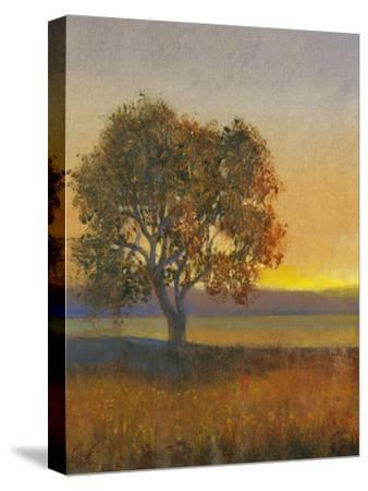 Firelight II-Tim O'toole-Stretched Canvas Print