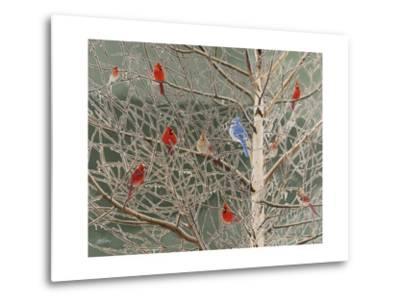 Ornaments-Fred Szatkowski-Metal Print